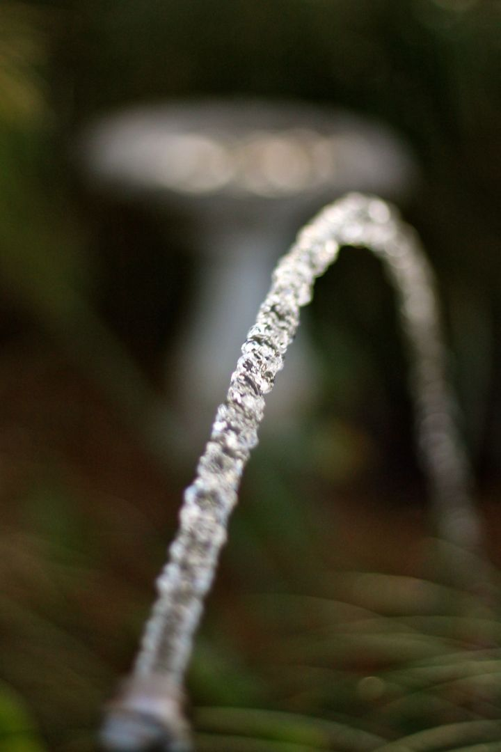 Watering the near-dormant garden....