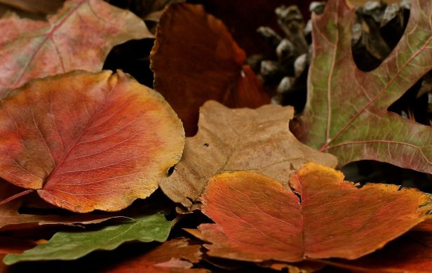 I pulled out my collection of morning walk fall color leaves this evening and tried to be creative....not!