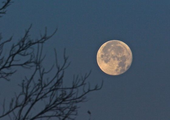 I went down to the lake to catch the 13th and last full moon moonset of 2012....