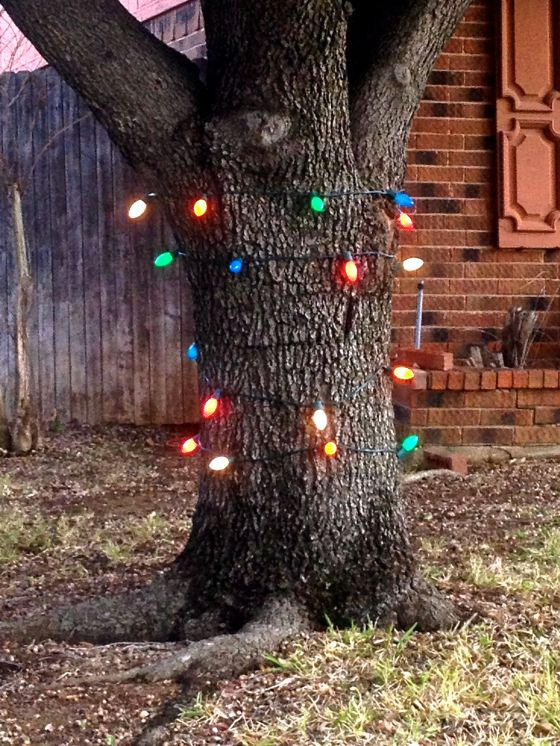 There's always a tree that needs lighted...even if you only have 1 spare strand of lights to string