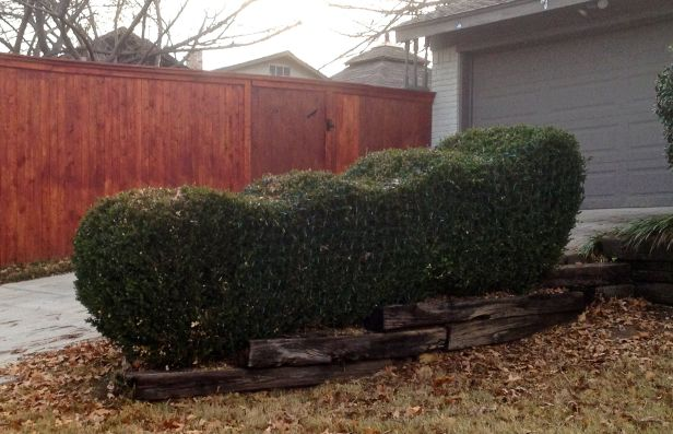 If I didn't know better, I'd say this is really Santa's sleigh disguised as a hedge....
