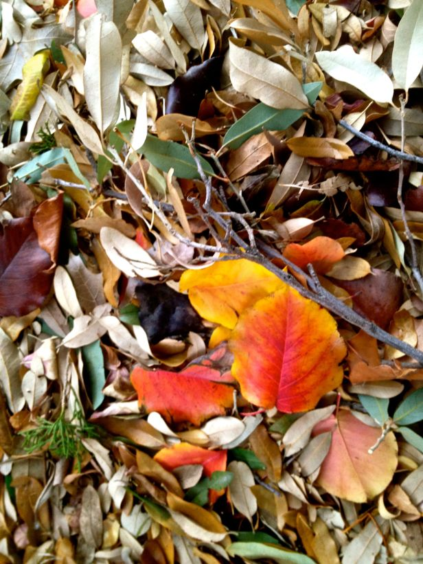 ...and sometimes into a leaf conglomeration wind row in the street gutter