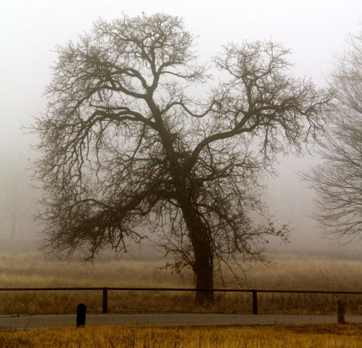 Funny how my tree friends show a whole new side of their character on a foggy winter morning