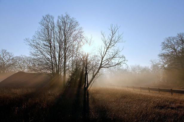 The sunrise cuts through the trees.....