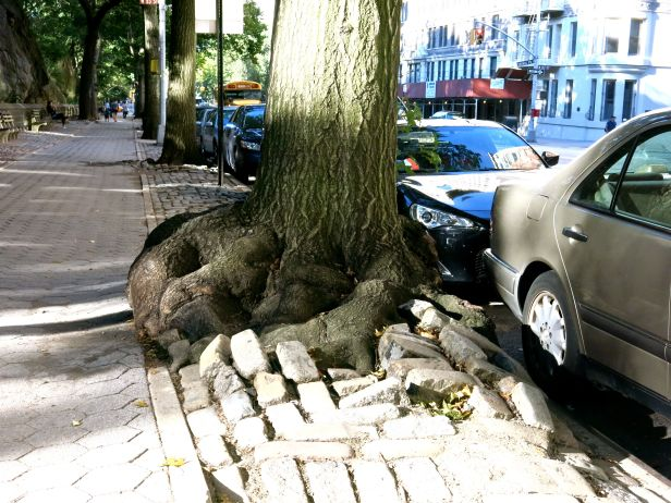 """""""One"""" mean looking root system…."""
