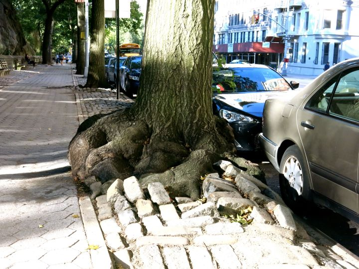 """One"" mean looking root system…."