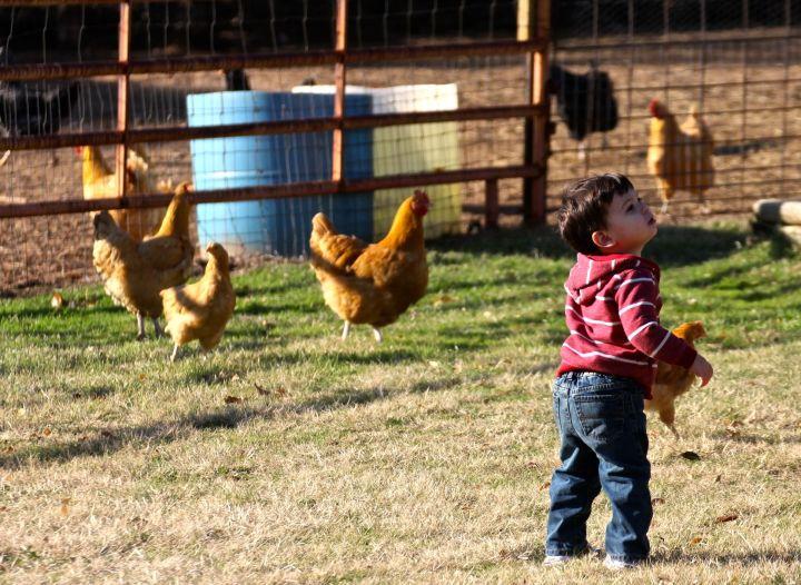 In  search of farm fresh eggs….