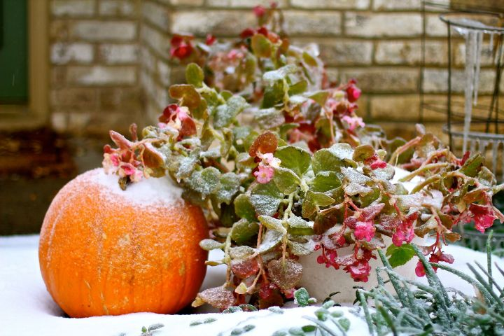 My Begonias were vulnerable and unprepared