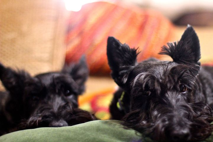 Sharing a couch pillow (with each other…certainly wouldn't be the humans around here)...