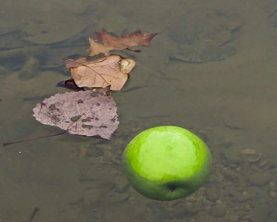 No one seemed to want to go bobbing for this apple….