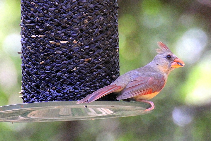 The summer feeder can be just as filling as a winter one...